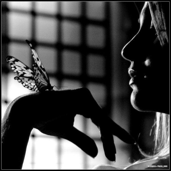 papillon femme